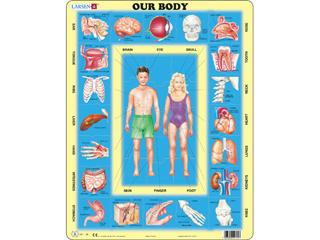 Az emberi test Ob1