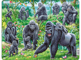 Gorillák Fh18