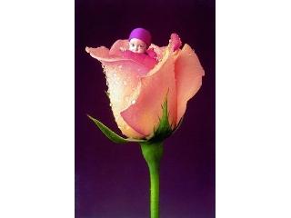 Anne Geddes: English Rose - 1000 darabos mini kirakó